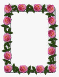 Pink Roses on White Wooden Frame. Beautiful pink and peach colored roses on white wooden photo frame with rounded corners. The roses are surrounded by dark green Stock Photography
