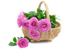Pink Roses in a Wicker Basket Stock Images