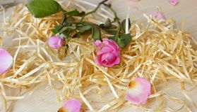 Pink roses and wood royalty free stock image
