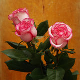Pink roses on a wooden Royalty Free Stock Photos