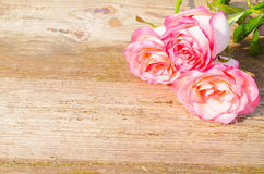 Pink roses on wooden background Stock Images