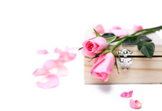 Pink roses on wooden  box in isolated Selective focus Stock Image