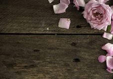 Pink roses on wooden copy space stock image