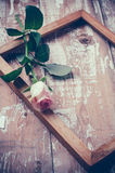 Pink roses and a wooden frame Royalty Free Stock Photo