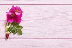 Pink roses on wooden table royalty free stock images