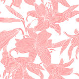 Pink royal lilies flowers on a white background. Vector illustration Stock Image