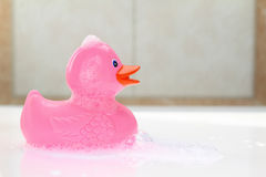 Pink rubber duck Royalty Free Stock Images