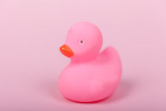 Pink rubber duck on pink background Stock Photos