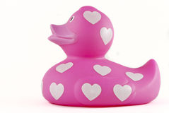 Pink rubber ducky Stock Image