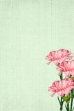 Pink Ruffles. Pink carnation bouquet on soft green textured background vector illustration