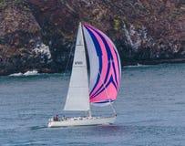 Pink Sails. San Francisco, CA, USA - May 21, 2016: A sailboat with a pink and blue sail cruising in San Francisco Royalty Free Stock Image