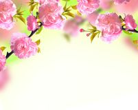 Pink sakura blossom, spring background Royalty Free Stock Photos