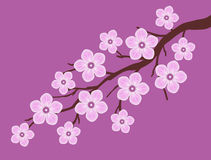 Pink sakura cherry blossom branch with dark pink background illustration Royalty Free Stock Photography