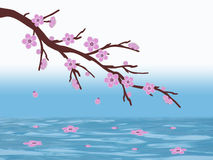 Pink sakura cherry blossom branch with running water and blue and white background illustration Royalty Free Stock Images