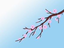 Pink sakura cherry blossom branch spring illustration green background Stock Photo