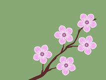 Pink sakura cherry blossom branch spring illustration green background Stock Image
