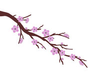 Pink sakura cherry blossom branch spring illustration white background Stock Photo