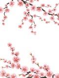 Pink sakura cherry blossoms. EPS 10 Royalty Free Stock Photos