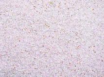 Pink sakura falled Royalty Free Stock Photo