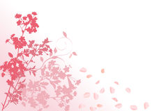 Pink sakura with falling petals Royalty Free Stock Photos