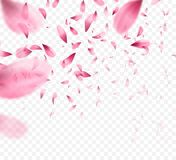 Pink sakura falling petals background. Vector illustration. EPS10 Stock Photography