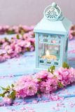 Pink sakura flowers  and decorative lantern with candle on blue Royalty Free Stock Photography