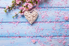 Pink  sakura flowers and white  decorative heart on blue wooden Stock Photos