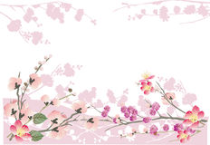 Pink sakura frame on white Stock Photography
