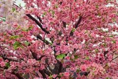 Sakura. Pink Sakura at outdoor park royalty free stock images