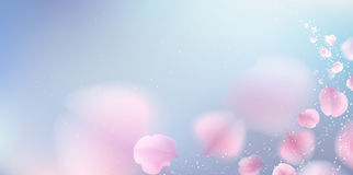 Pink sakura petals falling background Royalty Free Stock Photography