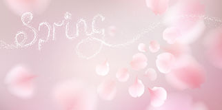 Pink sakura petals falling background. Pink sakura falling petals vector background. 3D romantic illustration with Spring text. creative soft color design for vector illustration