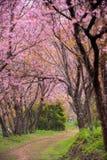 Pink sakura on road Stock Image