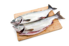 Pink Salmon Royalty Free Stock Image