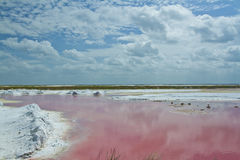 Pink salt flats Royalty Free Stock Photos