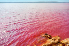 Pink salt lake La Salinas de La Mata of Torrevieja Royalty Free Stock Photo
