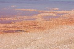 Pink Salt Lake on summer sunny day in Namibia royalty free stock photos