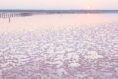 Pink salt lake, where salt is mined for food. Royalty Free Stock Images
