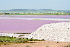 Pink salt marsh Royalty Free Stock Photography