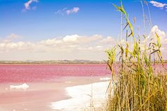 Pink salty lake and blue sky with clouds. Spain, Torrevieja Stock Photo