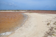 Pink salty lake, Bonaire Royalty Free Stock Image