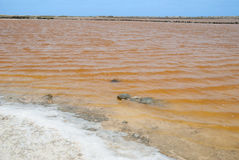 Pink salty lake, Bonaire Royalty Free Stock Photography