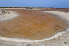 Pink salty lake, Bonaire Stock Photos