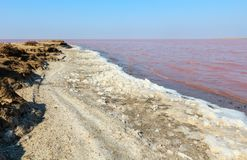 Pink salty Syvash Lake, Ukraine. Pink extremely salty Syvash Lake, colored by microalgae with crystalline salt depositions. Also known as the Putrid Sea or Stock Photography