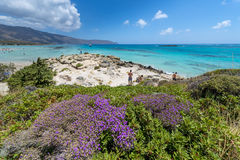 Pink Sand Beach of Elafonissi royalty free stock image