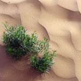 Pink sand ripples and green plant Stock Photos