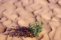 Pink sand ripples and green plant Stock Photography
