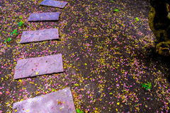 Pink sand stone walkway on colorful ground full with flowers drop on the rain day. Royalty Free Stock Image