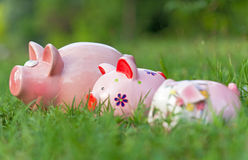 Pink saving pigs Royalty Free Stock Photos
