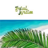 pink scallop seashell Υπόβαθρο για την κάρτα με τα ταξίδια ελεύθερη απεικόνιση δικαιώματος