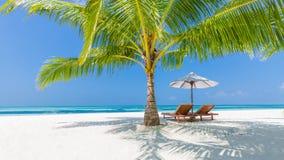 pink scallop seashell όμορφο τοπίο παραλιών σκηνή φύσης τροπική Φοίνικες και μπλε ουρανός Έννοια καλοκαιρινών διακοπών και διακοπ στοκ εικόνα